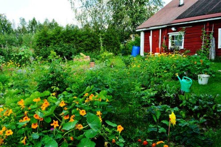 Eloperäinen kate eli maan peittäminen tarjoaa maalle suojaa ja ravinteita maaperän eliöille. Vahvin lannoittava kate on ruohosilppu, jossa on kaikki kasvien tarvitsemat ravintoaineet.