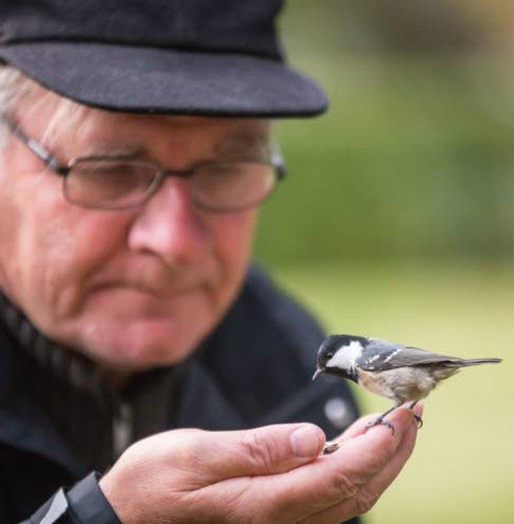 Viime keväänä Erkki Alasaarela alkoi koeluonteisesti tutkia, miten linnut suhtautuvat omasta lajista otettuun valokuvaan tai peilikuvaan.