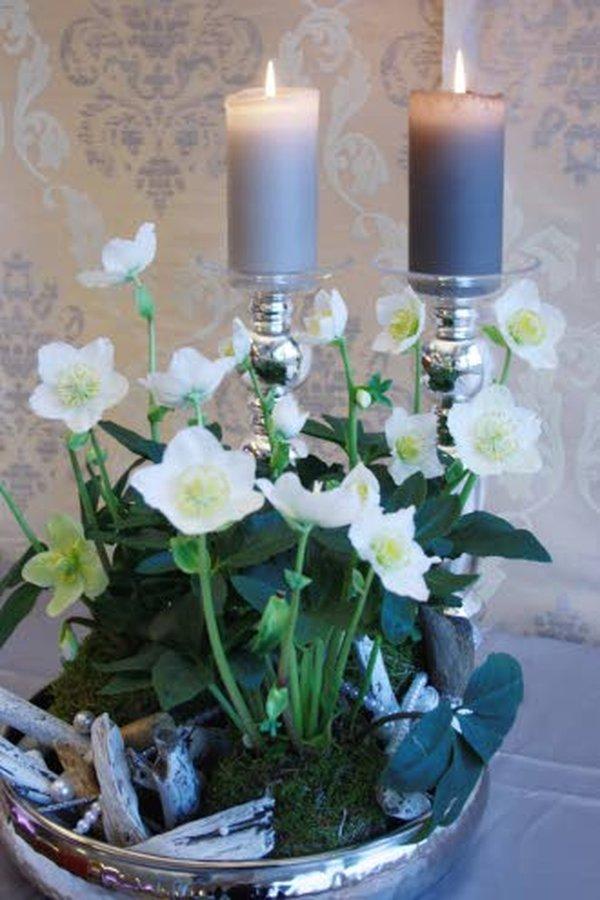 Joulun ajan jouluruusun voi Etelä-Suomessa istuttaa keväällä kukkapenkkiin, jossa se saattaa menestyä perennana. Kuva: Kauppapuutarhaliitto.