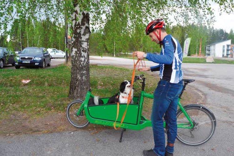 Ansa viihtyy lastipyörän etukaukalossa hyvin, mutta valjaat on silti hyvä pitää kädessä.