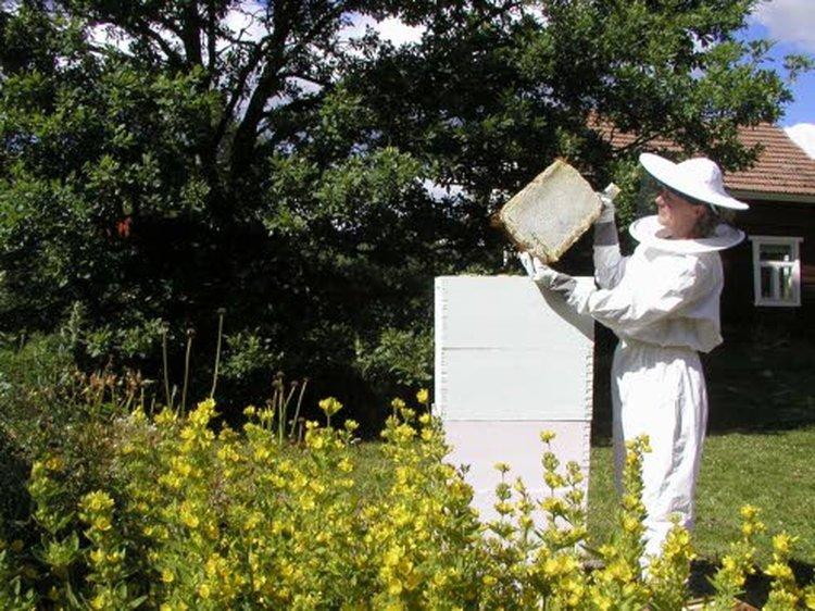 Korpilahdelta löytyy Suomen suurin mehiläistarha. Marja Kompan ja Ari Seppälän luomutilalla on noin 1500 mehiläispesää. Yksi mehiläispesä tuottaa Suomen olosuhteissa vuodessa keskimäärin 40 kiloa hunajaa.