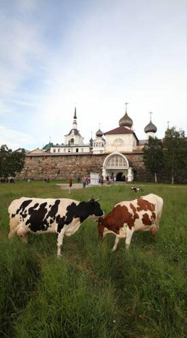 Viipurissa kannattaa Arvo Tuomisen mukaan käydä Alvar Aalto-kirjastossa sekä Uno Ullbergin suunnittelemassa Taidemuseossa, joka nykyisin toimii Eremitaasin filiaalina, joten näyttelyt ovat laatutavaraa. Ruokailla voi vaikkapa uudelleen rakennetussa Espilässä. Sortavalan keskusta rakentuu Alpo Sailon veistämän Runonlaulaja-patsaan ympärille. Sen ympärillä sijaitsee suomalaisen arkkitehtuurin helmiä, kuten Uuno Ullbergin suunnittelema Suomen Pankin filiaali (nyk. Bank Rossija) sekä Onni Tarjanteen ja Erkki Huttusen käsialaa oleva Hotelli Seurahuone, jonka yhteydessä toimii käypä kahvila. Käsisalmessa kannattaa tutustua linnoitukseen ja sen museoon. Linnan ovi on päällystetty ruotsalaisten haarniskoilla; tämän idean Pietari Suuri keksi juovuspäissään, kun hän juhli vuonna 1710 Käkisalmessa ruotsalaisista saatua voittoa.