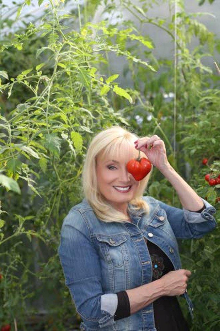 Tänä vuonna Sonja Lumpeella on noin 500 tomaatin tainta, jopa 50 eri lajiketta.