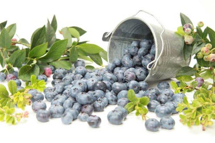 Mustikoissa on noin viisi kertaa enemmän antioksidantteja kuin porkkanoissa, omenoissa, parsakaalissa ja kesäkurpitsassa.