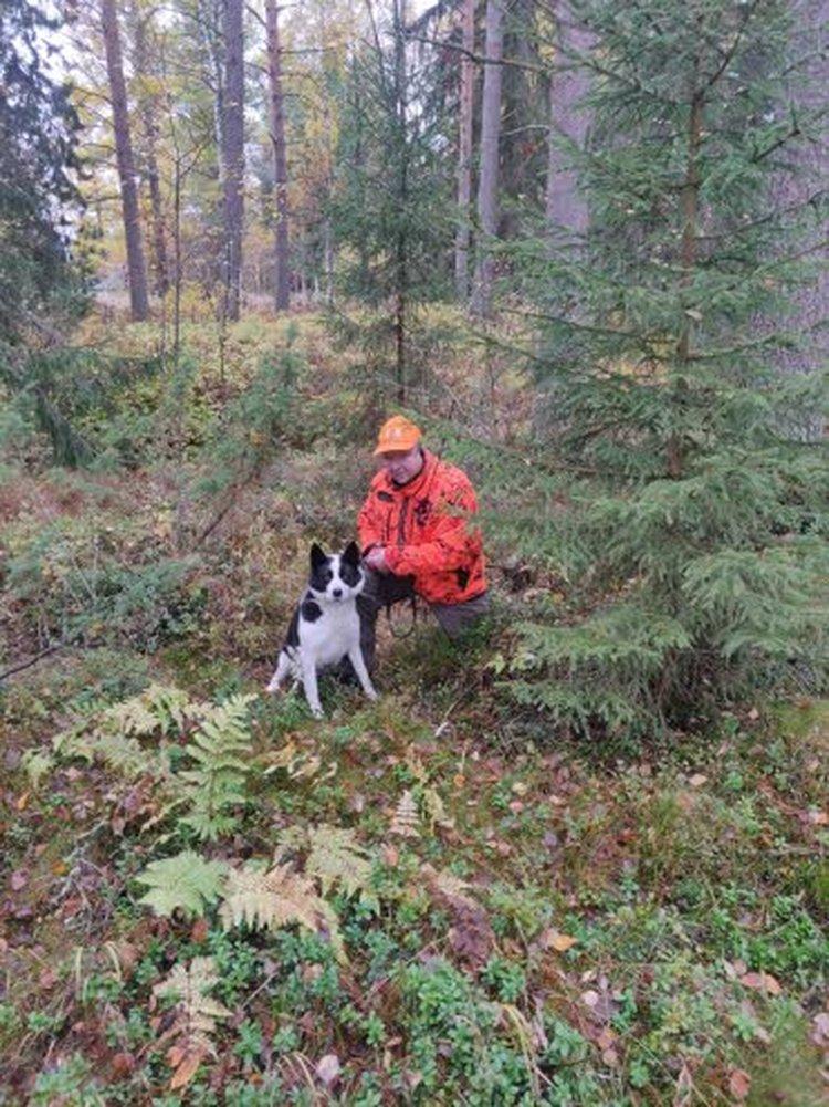 – Heti ensimmäisenä päivänä kaatui neljä hirveä, kun hirvenmetsästys meillä Kannuksessa alkoi lauantaina 12. lokakuuta. Hirvilupia meillä on 24, kertoo Ari Isohanni. Arin karhukoira Nelli on myös mukana hirvijahdissa, vaikka se pääsääntöisesti viihtyy perhekoirana.