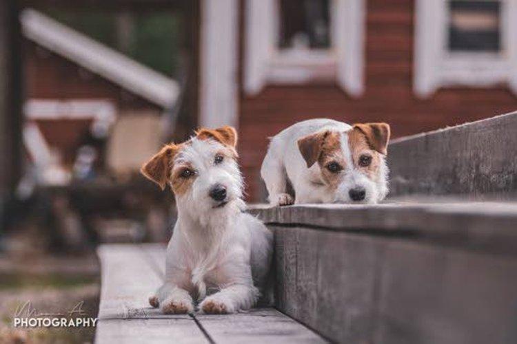 Valokuvausta harrastava Moona Alila ottaa koiristaan upeita kuvia.