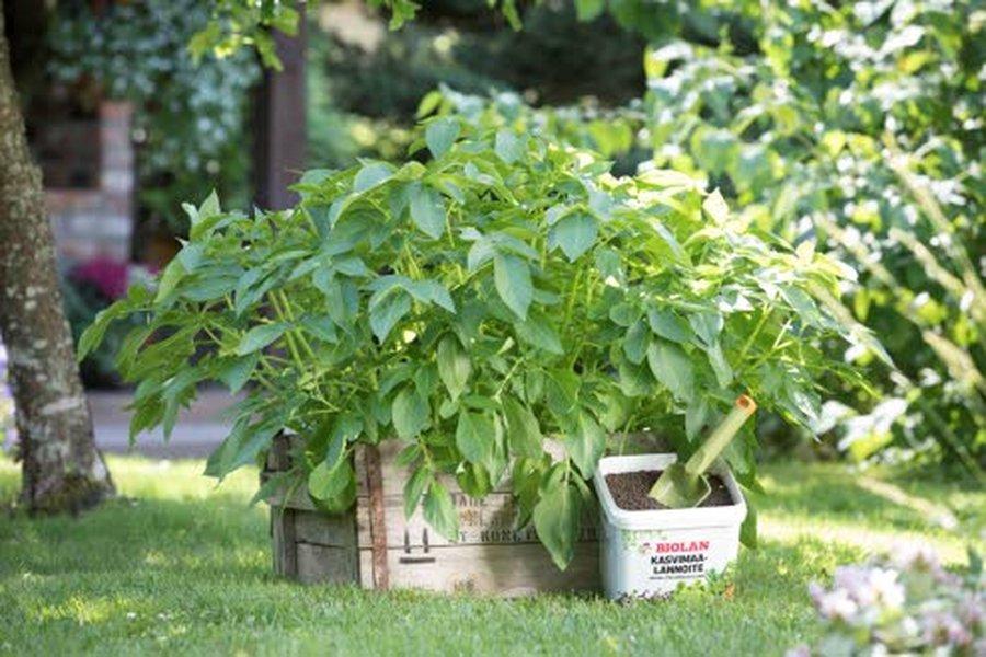 Ruukkupuutarhan rakentamisessa käytettävien ruukkujen kooksi Biolan Oy:n puutarhaneuvoja Riikka Kerttula suosittelee vähintään kymmentä litraa. Mitä isompi ruukku, sen helpompaa kasvien hoito on. Kuva: Biolan.