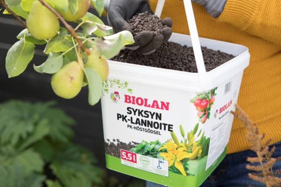 Syyslannoitteet eroavat kevät- ja kesälannoitteista siiten, että syyslannoitteissa ei ole typpeä. - Typen ansiosta kasvien vihreät osat innostuvat kasvamaan. Se ei ole suotavaa syksyllä, kun kasveja valmistellaan talvilevolle, toteaa Biolanin puutarhaneuvoja Riikka Kerttula.